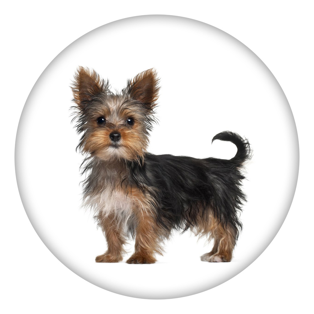 Snap Jewelry Enamel Ceramic - Dog Yorkie